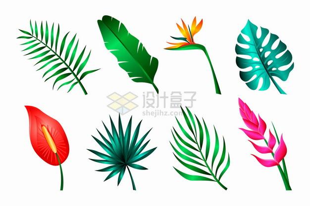 红掌花鹤望兰芭蕉叶等热带花卉花朵鲜花叶子png图片素材 生物自然-第1张