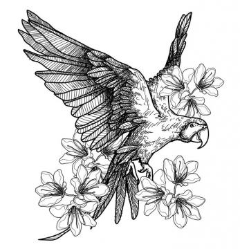 手绘线条风格鹦鹉和花朵图片免抠素材