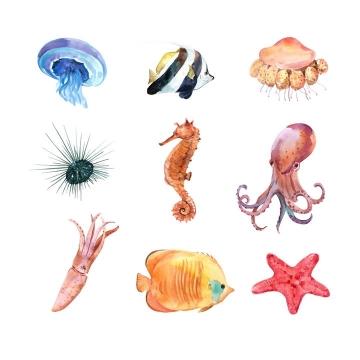 水彩画风格水母海胆海马章鱼乌贼海星等海洋鱼类图片免抠矢量素材