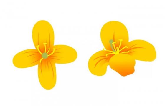 手绘风格两朵油菜花花朵花卉png图片免抠素材