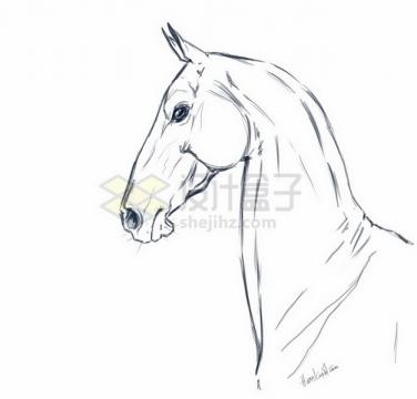手绘素描风格骏马头部png免抠图片素材