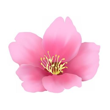 黄色花蕊的粉红色桃花png图片免抠素材