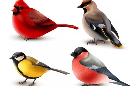 4种可爱的小鸟野生动物图片免抠素材