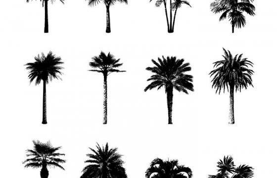 热带树木棕榄树剪影图片免抠素材合集