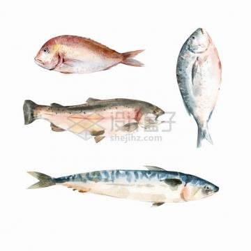 鲳鱼马鲛鱼黄花鱼三文鱼等美味海鲜海鱼水彩插画png图片素材