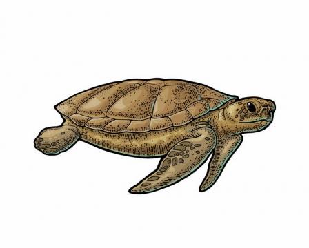 手绘风格海龟海洋野生动物png图片免抠矢量素材