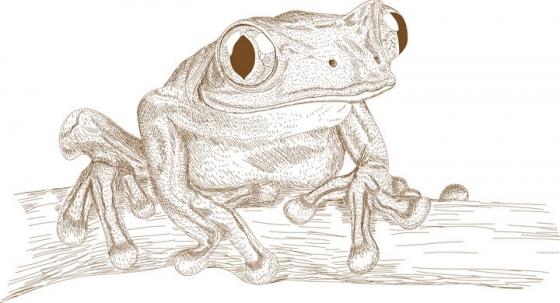 手绘插图风格青蛙树蛙图片免抠矢量图素材