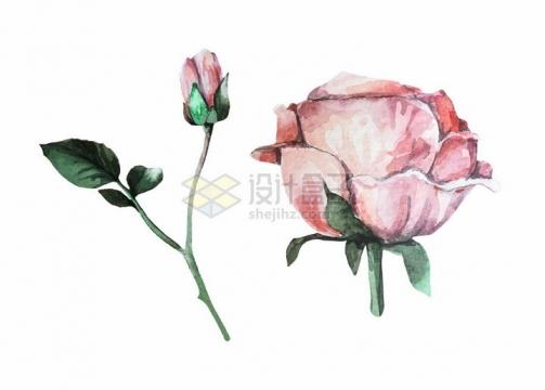 鲜艳的玫瑰花水彩花卉鲜花插画png图片免抠矢量素材