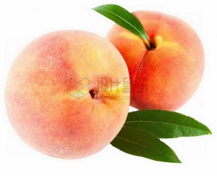 两颗完整的源东白桃水蜜桃带叶子png图片素材
