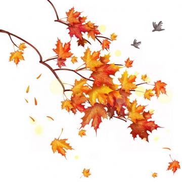 秋天枝头上的红枫叶树叶767683png图片素材