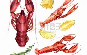 澳洲大龙虾小龙虾柠檬等美味海鲜美食水彩插画png图片素材