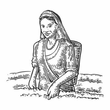 手绘黑色线条插画风格正在采摘茶叶的采茶女png图片免抠矢量素材