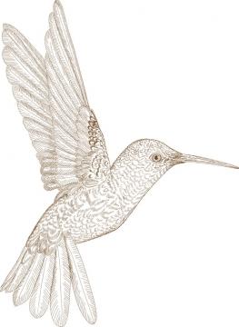 手绘插图风格蜂鸟图片免抠矢量图素材