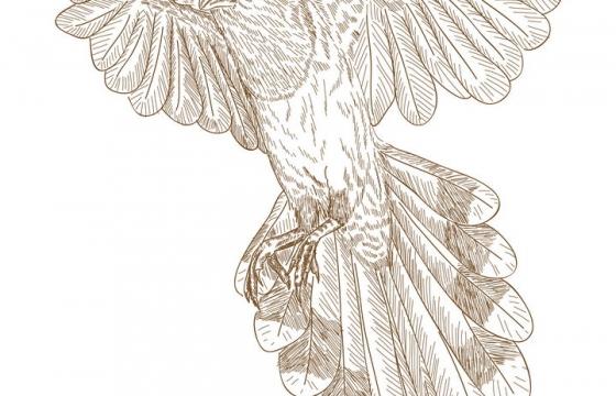 手绘插图风格虎皮鹦鹉图片免抠矢量图素材