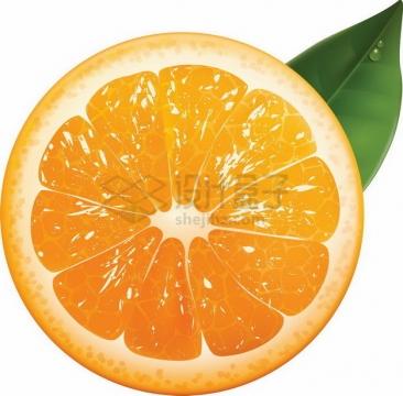 橙子横切面麻阳冰糖橙png图片素材