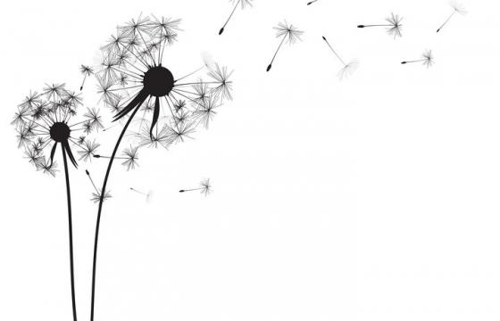 吹散的蒲公英花朵和飞舞的蒲公英花絮黑色剪影图片免抠矢量素材