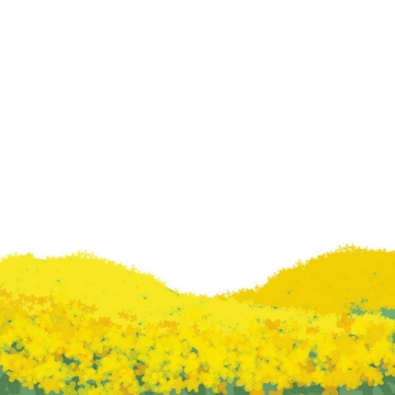 彩绘风格漫山遍野的油菜花风景png图片免抠素材