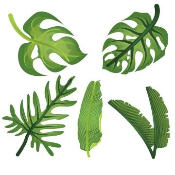五款绿叶热带植物树叶图片免抠素材