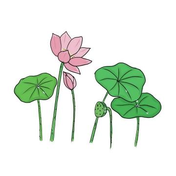 手绘涂鸦风格绿色的荷叶和粉色的荷花图片免抠素材