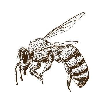 手绘素描风格蜜蜂马蜂免抠矢量图片素材