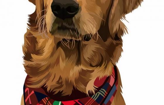 彩绘金毛犬宠物狗品种png图片免抠矢量素材