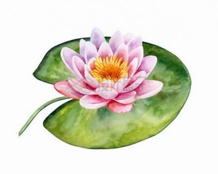 粉红色的莲花和叶子水彩插画png图片素材