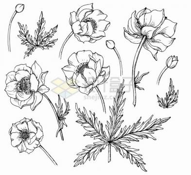 春天里的金莲花花朵手绘素描插画png图片免抠矢量素材