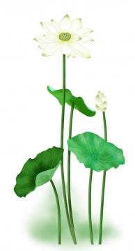 绿色荷叶中间盛开的白色荷花图片免抠素材