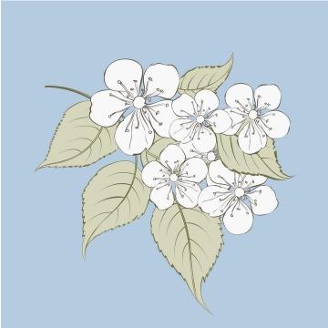 彩色线描风格梨花花卉图片免抠矢量图素材