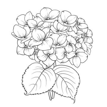 线描风格兰花花卉图片免抠矢量图素材