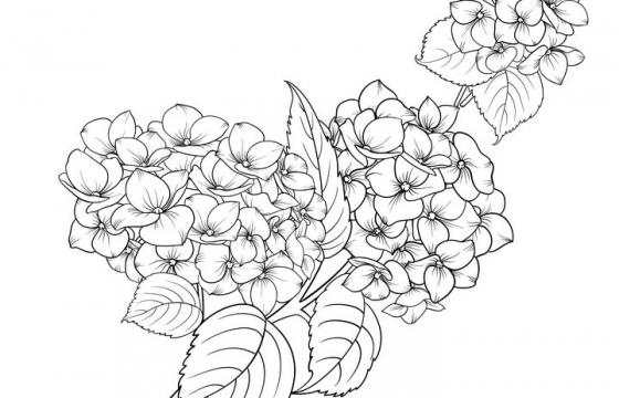线描风格枝头上的兰花花卉图片免抠矢量图素材