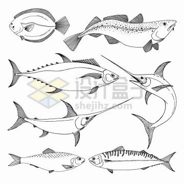 手绘素描风格马鲛鱼大黄鱼等各种海鱼png图片免抠矢量素材