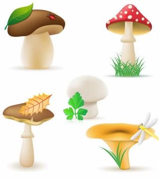 卡通风格香菇毒蝇伞深凹杯伞等蘑菇美味美食png图片免抠矢量素材