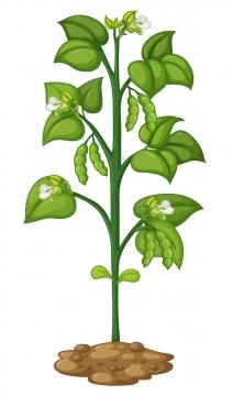 一棵手绘风格豌豆植物图片免抠素材