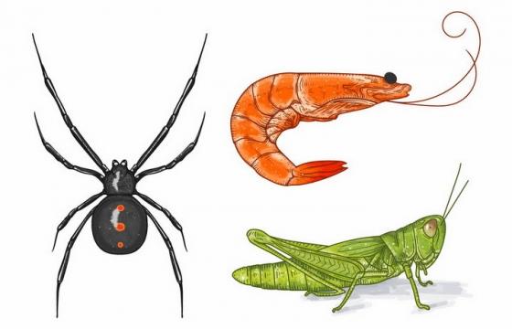 彩色手绘风格蜘蛛河虾和蚂蚱等小动物png图片免抠矢量素材