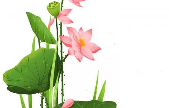 手绘风格翠绿的荷叶和粉色的荷花夏天图片免抠素材