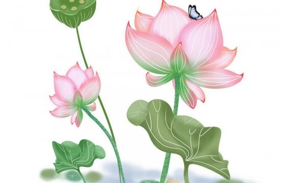 手绘风格盛开的荷花荷叶莲蓬蝴蝶图片免抠素材