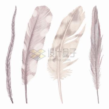4根彩绘风格淡紫色羽毛png图片免抠矢量素材