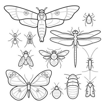 手绘线条风格蛾子蝴蝶苍蝇蜜蜂蚂蚁甲虫等昆虫图片免抠矢量素材