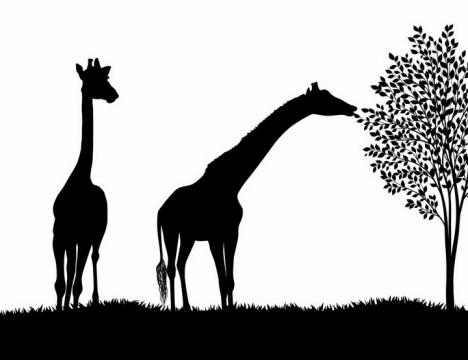 非洲大草原草地上吃树叶的长颈鹿非洲野生动物剪影png图片免抠矢量素材