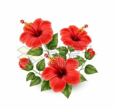 盛开的扶桑花红色花朵270692png图片素材