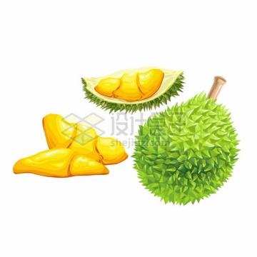 水果之王榴莲彩色插画539739png图片素材