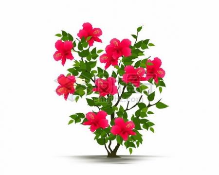 一株扶桑花鲜花花朵花卉503312png矢量图片素材