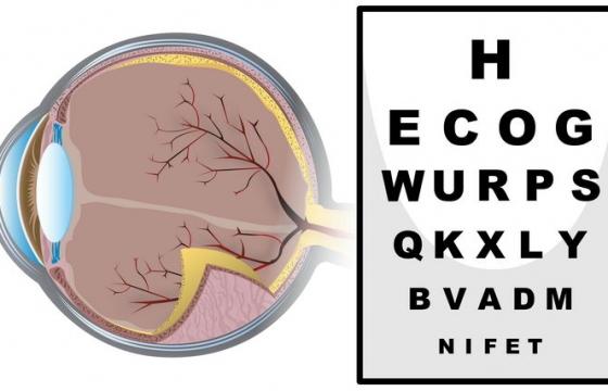 人体眼球结构解剖图医学配图图片免抠矢量图素材