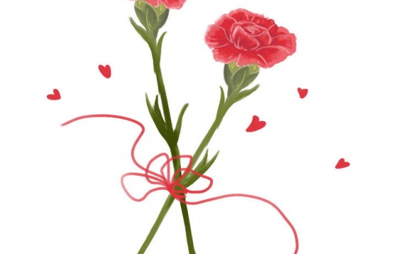 两支红色的康乃馨母亲节花卉花朵图片免抠素材