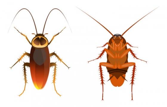 蟑螂的正面和反面害虫昆虫图片免抠矢量素材