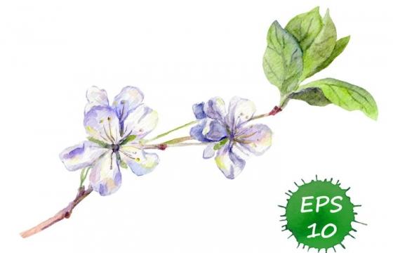 水彩画风格枝头上的紫色白色桃花梅花图片免抠矢量素材