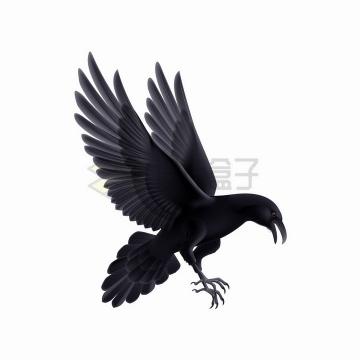展翅高飞的乌鸦png图片免抠矢量素材