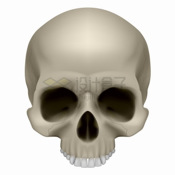 逼真的骷髅头上部分头盖骨png图片免抠矢量素材