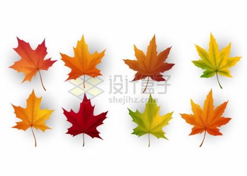8种颜色的深秋的枫叶装饰379528png矢量图片素材